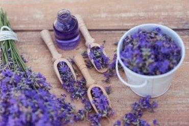 Lawenda - 5 sposobów na wykorzystanie tego odprężającego remedium