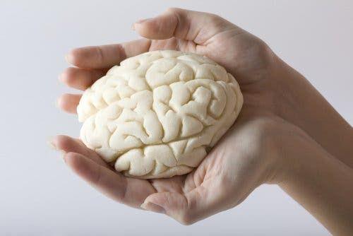 Mózg w dłoniach