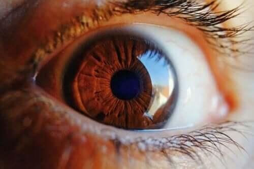 Jak oczyszcza się oko?