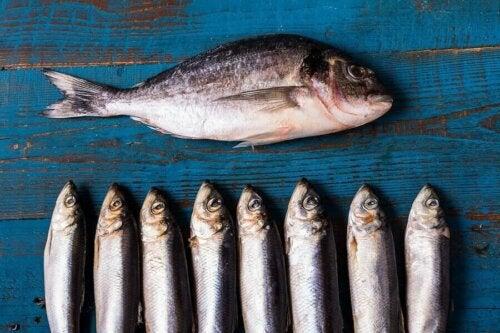 Ryby o tłustym mięsie