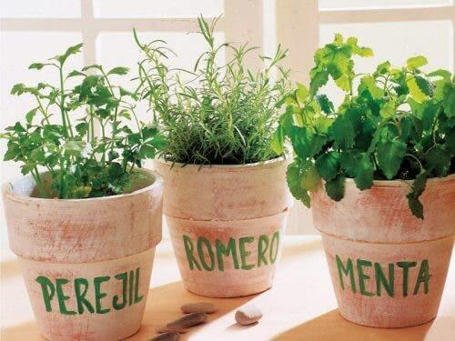 Rośliny lecznicze i ich zastosowania