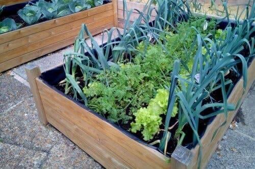Skrzynka na rośliny kuchenne