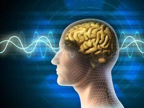 Płatki owsiane zapewniają zdrowie mózgu