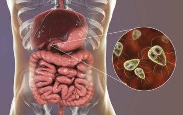 Lamblioza: objawy i leczenie