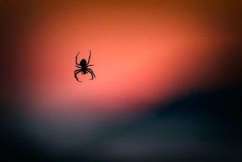 Jad pająka może pomóc zmniejszyć uszkodzenia mózgu