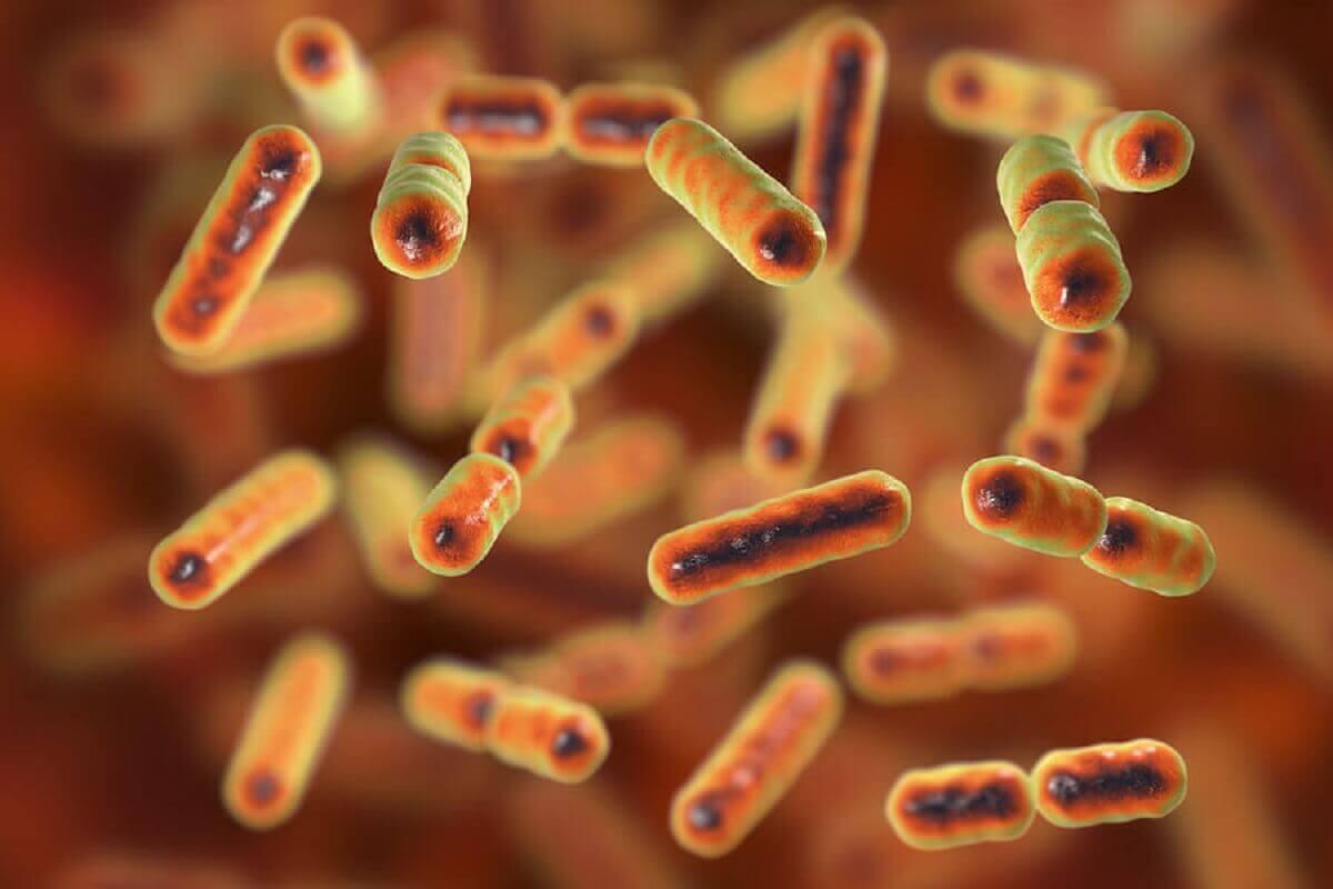 Zaburzenia w obrębie mikroflory jelit nazywa się dysbiozą jelitową.