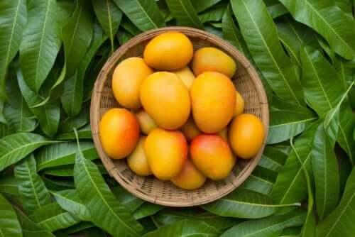 Liście mango - 6 zalet, o których być może nie wiedziałeś