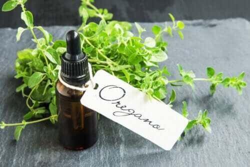 Domowej roboty olejek z oregano - jego przygotowanie i zalety