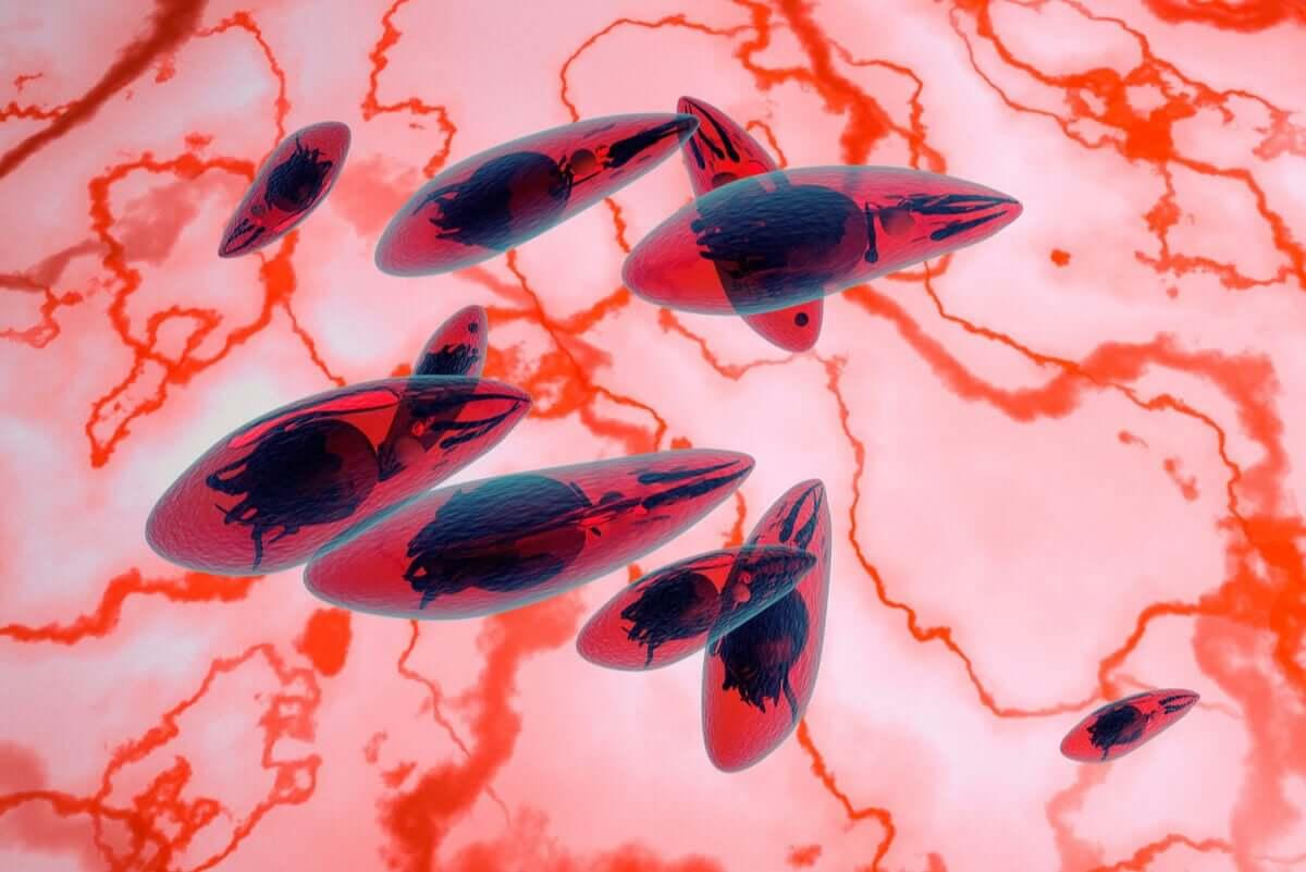 Toksoplazma to pasożyt wywołujący wszystkie rodzaje toksoplazmozy, w tym oczną.