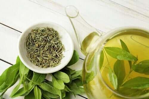 Zalety zielonej herbaty - czy wydłuża ona nasze życie?