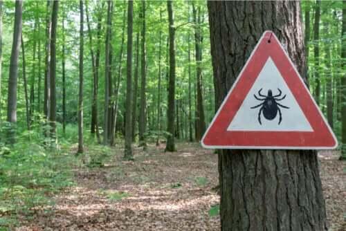 Leczenie choroby z Lyme - na czym polega?