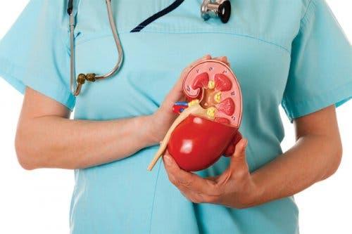 Lekarz trzymający nerkę - PChN