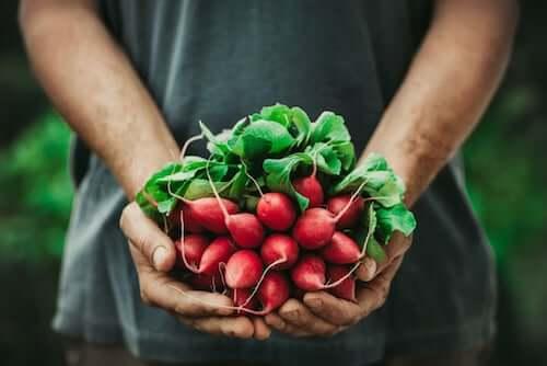 Owoce i liście rzodkiewki w dłoniach