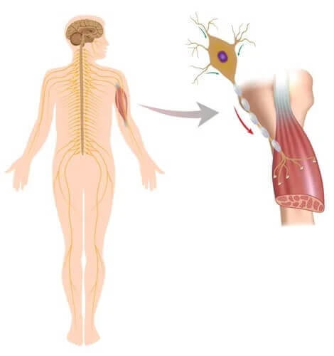 Zaburzenia nerwowo-mięśniowe