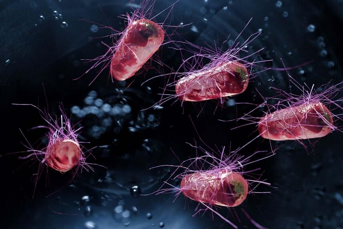 Bakteria E.Coli znana jest ze swoich zakaźnych właściwości.