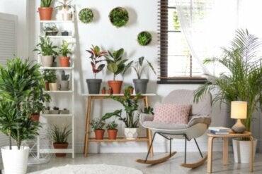 Odporne rośliny – wymagają minimalnej pielęgnacji!