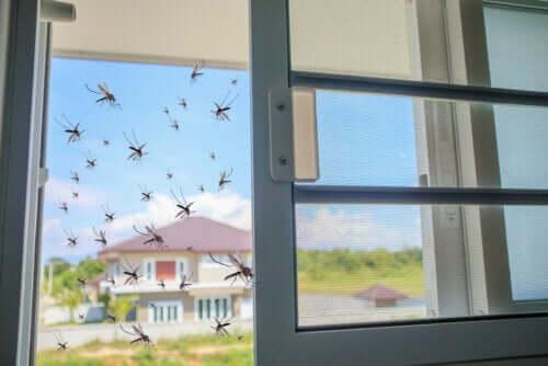 Bazylia - naturalny repelent na komary