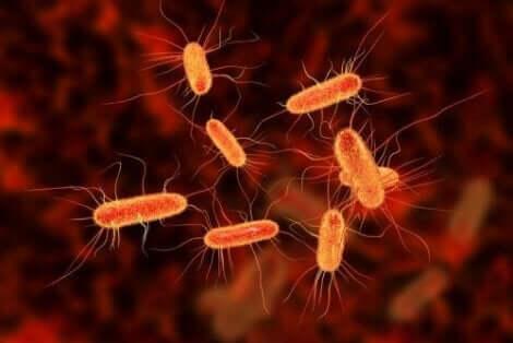 Infekcje bakteryjne