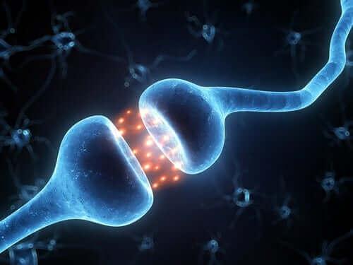 Podłączenie neuronów