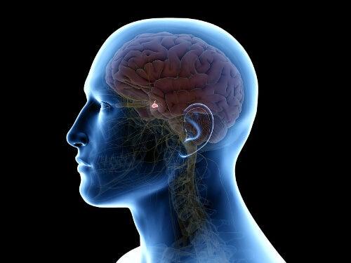 Układ neuroendokrynny