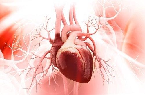 Zdrowe serce - siedem przydatnych wskazówek