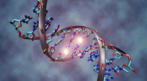 Genom - ogon szczątkowy