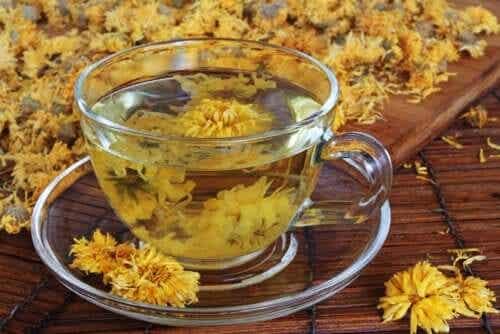 Herbata z chryzantemy: zalety i przeciwwskazania