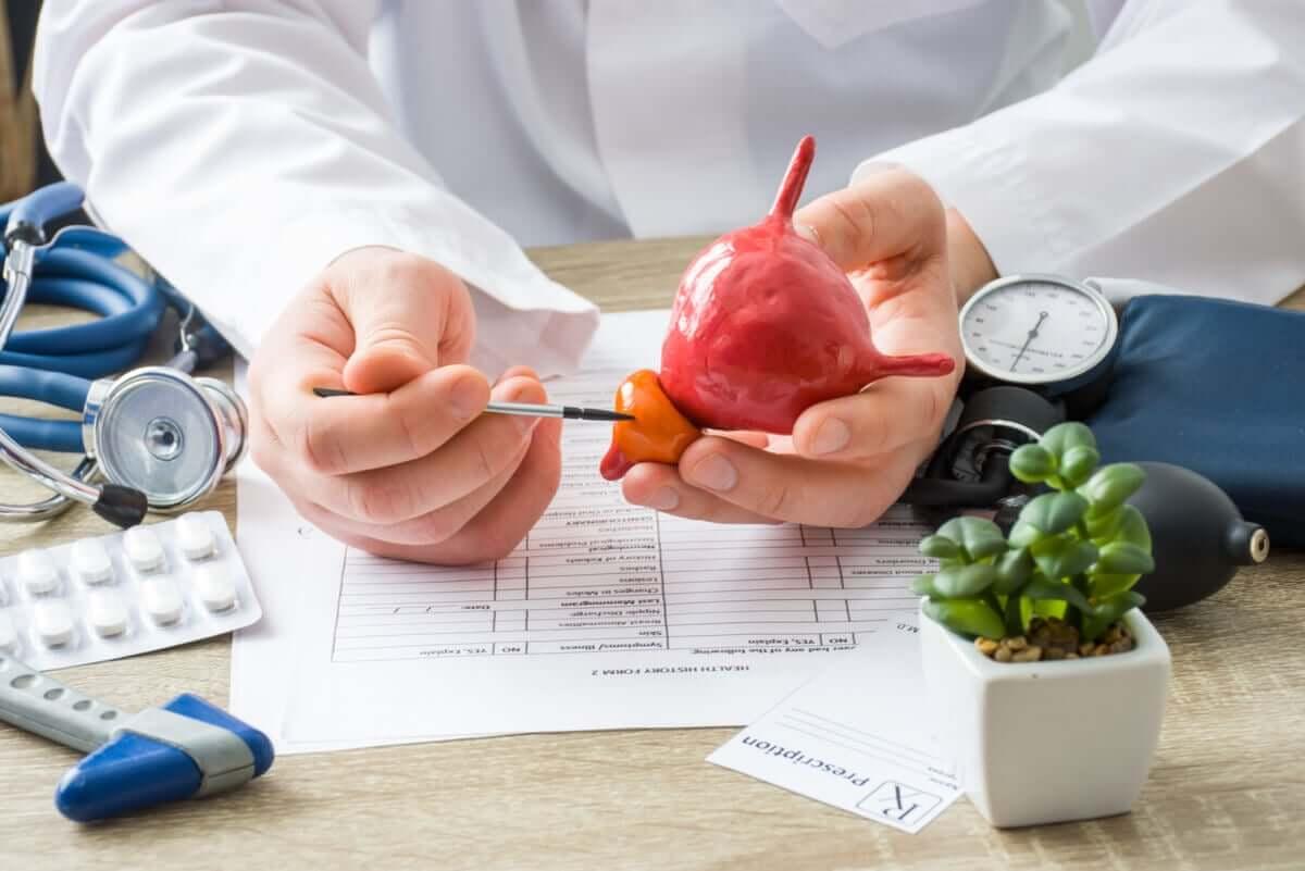 Prostata to gruczoł znajdujący się pod pęcherzem moczowym.