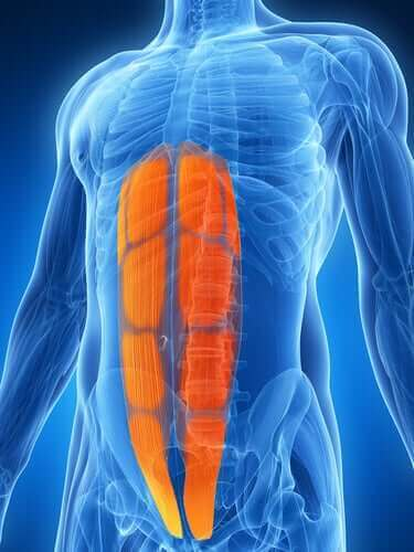 Naderwanie mięśnia brzucha - co warto wiedzieć