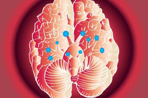 12 nerwów czaszkowych i ich funkcje
