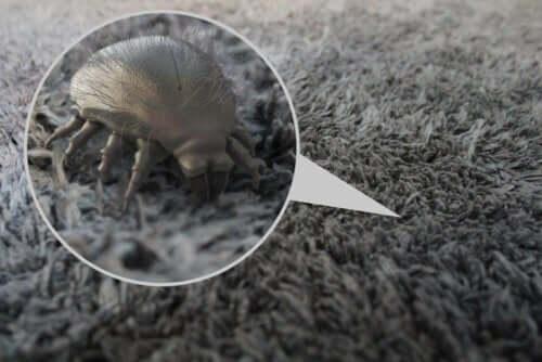 Alergia na roztocza - dowiedz się więcej na jej temat!
