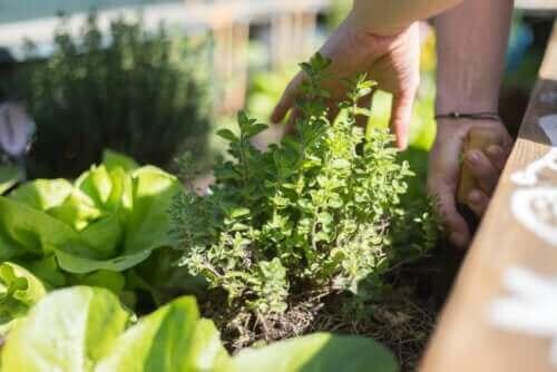 Ogród na tarasie: poznaj najważniejsze wskazówki