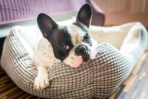 Poznaj 5 pomysłów na domek dla zwierzaka