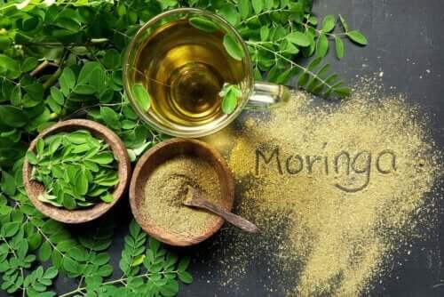 Olej moringa - dowiedz się czegoś więcej na jego temat!