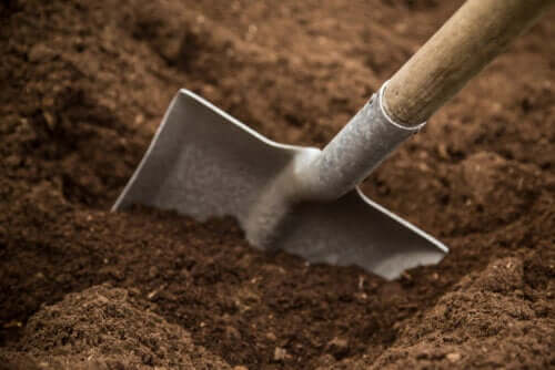 Jaka gleba jest w Twoim ogrodzie? Rodzaje gleby i charakterystyka