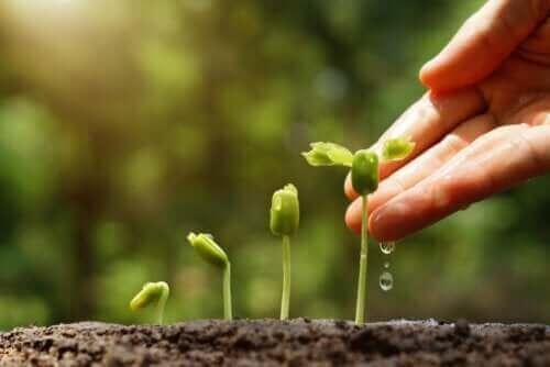 Poznaj 6 pomysłów na zrównoważony ogród