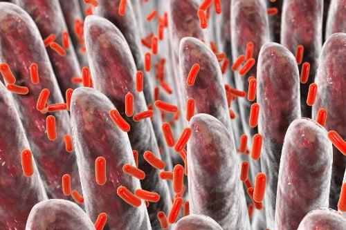 Bakterie jelitowe