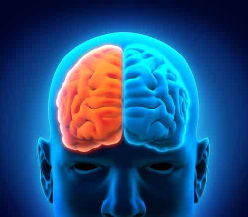 Schemat mózgu