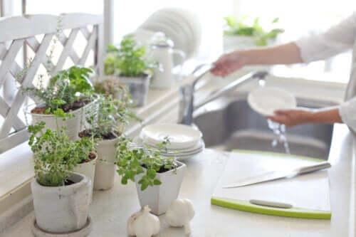 Rośliny w kuchni - 5 korzyści z ich posiadania
