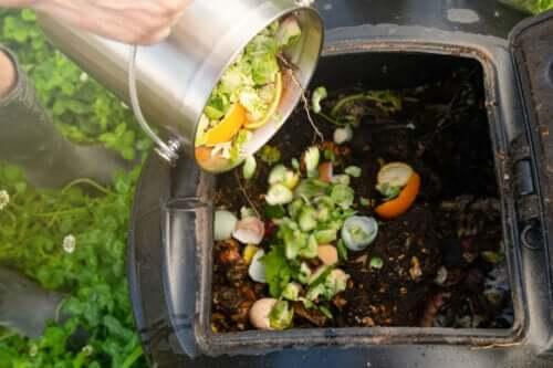 Kompostowanie w domu - zastosuj te pożyteczne wskazówki!