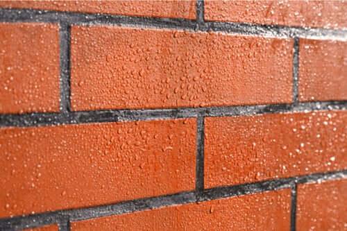 Pleśń na ścianach z cegły - jak chronić mury?