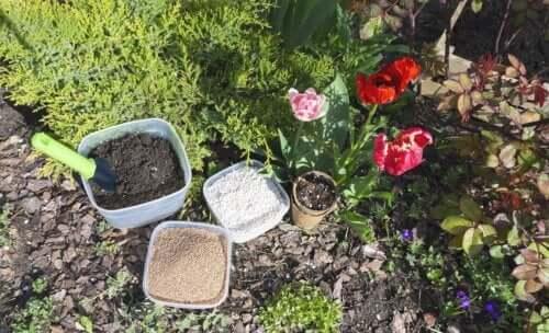 Perlit dla roślin: co to jest, do czego służy i jak się go stosuje?