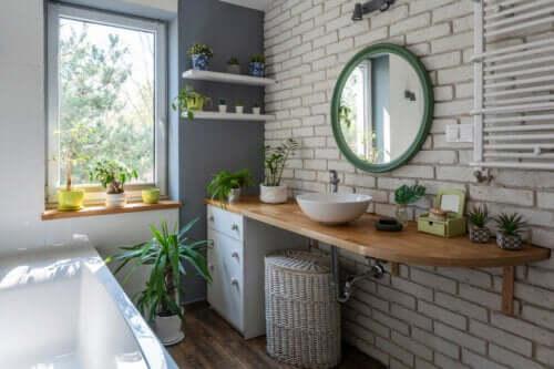 Rośliny w łazience - 7 pomysłów na dekorację