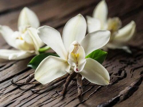 Kwiat wanilii