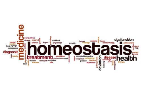 Homeostaza - czym jest i co należy o niej wiedzieć